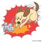 犬とネズミ